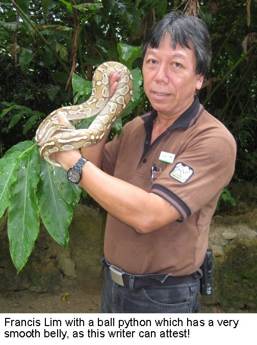 The reptile man